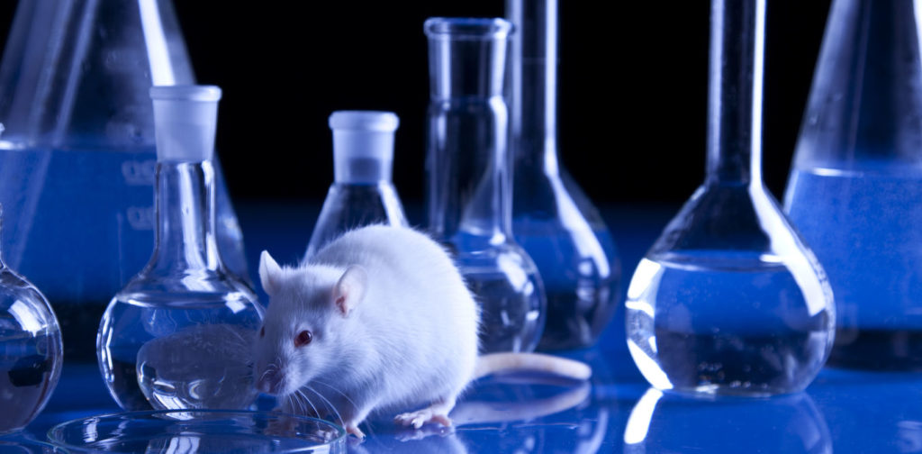 rat laboratoire
