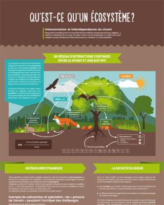 Qu'est-ce qu'un écosystème