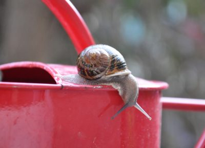 escargot sur un arrosoir