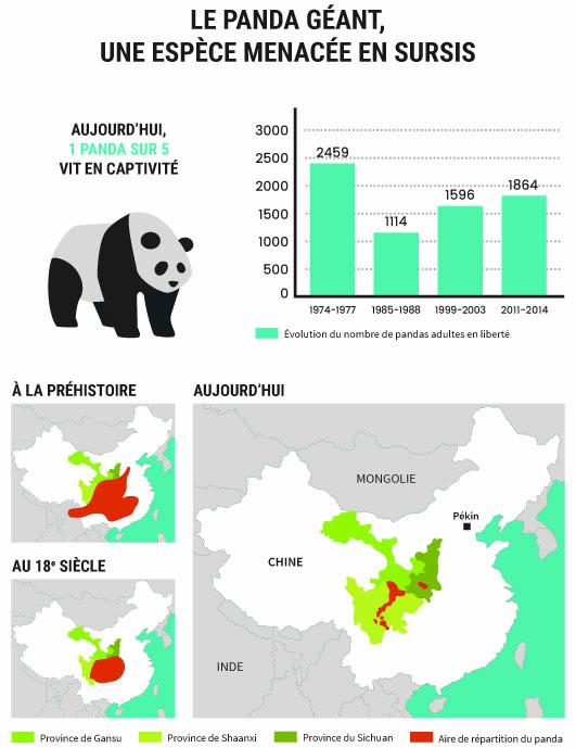 Le panda géant, une espèce menacée en sursis