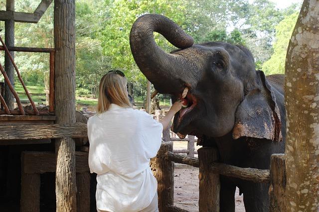 éléphant captivité