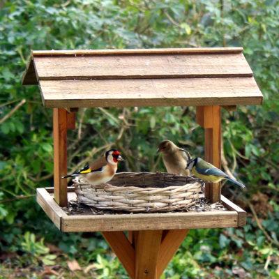 Nourrir les oiseaux en hiver, faciliter leur survie