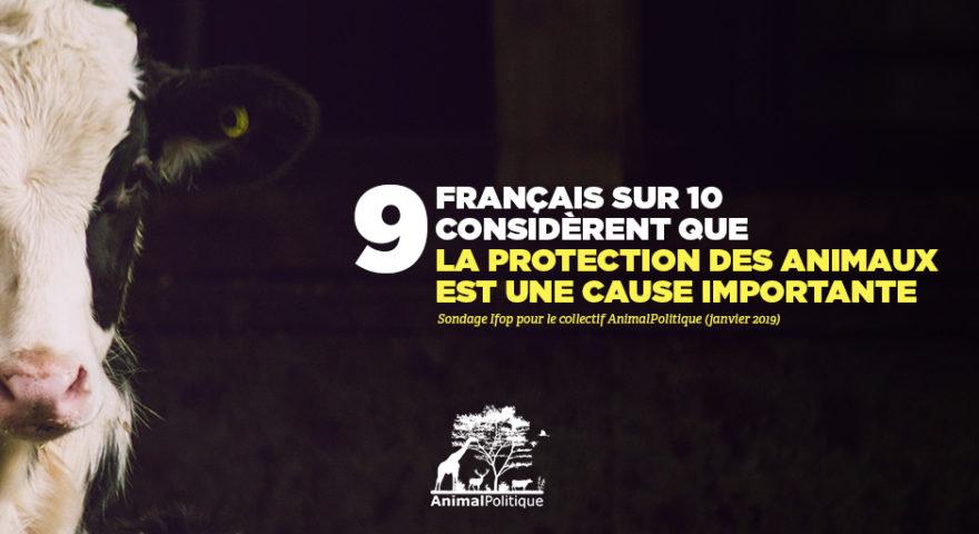 9 Français sur 10 considèrent que la protection des animaux est une cause importante