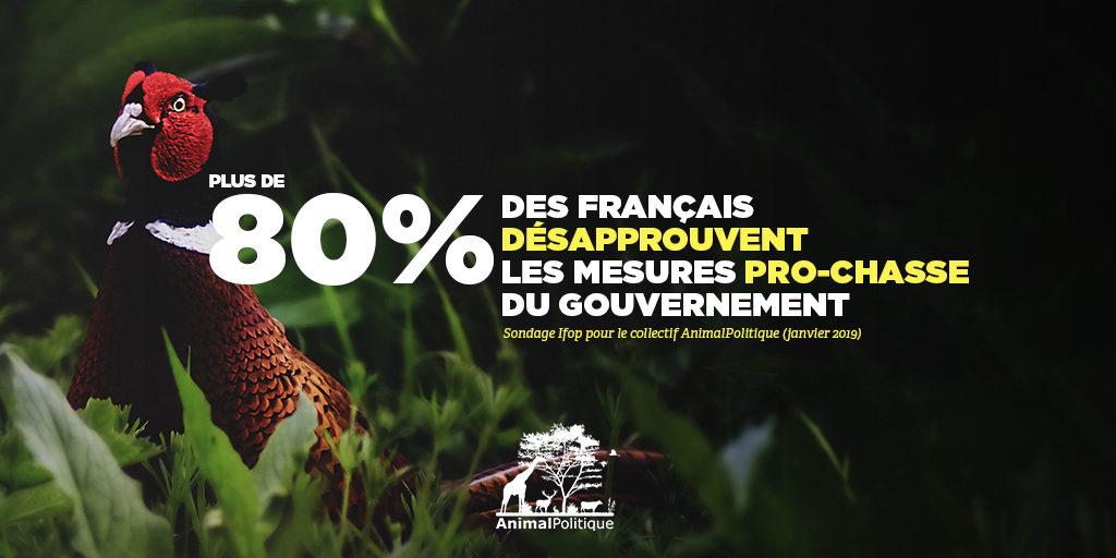 Plus de 80 % des Français désapprouvent les mesures pro-chasse du gouvernement