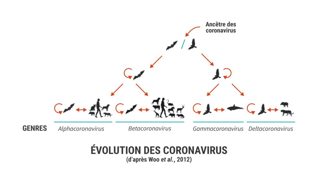 Evolution coronavirus