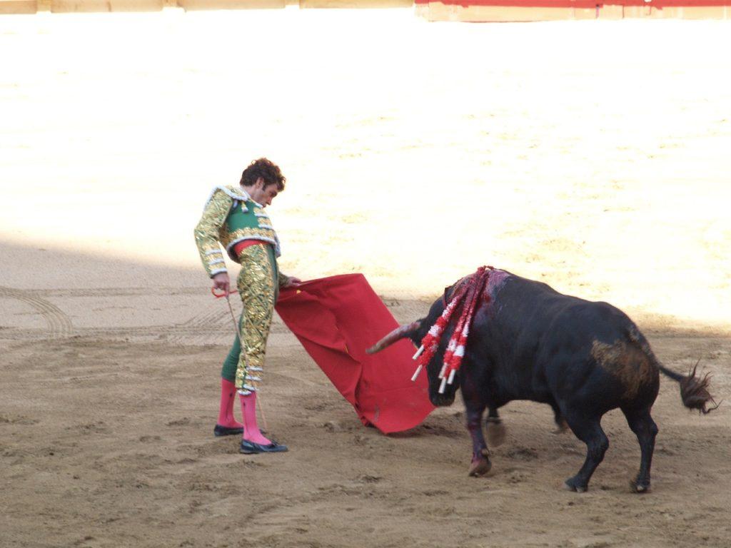 torero face à un taureau (corrida)