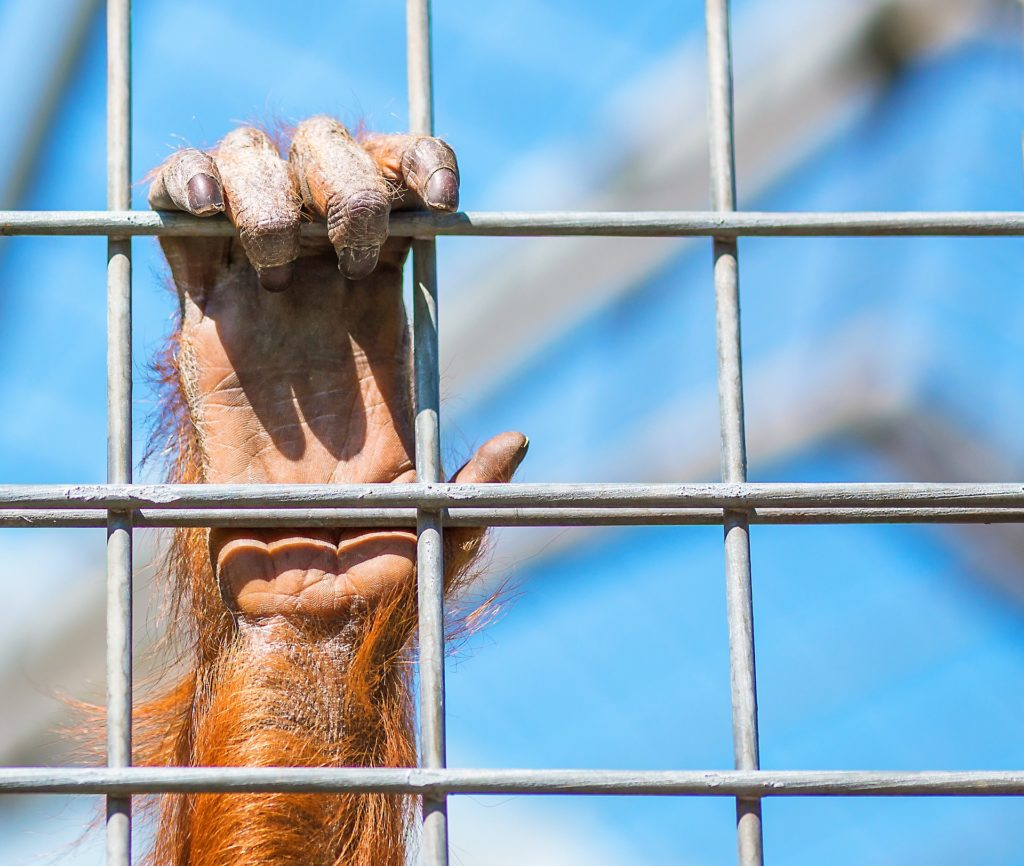 singe zoo