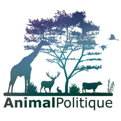 animal politique collectif ONG