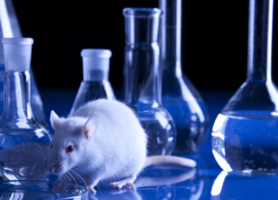 rat laboratoire