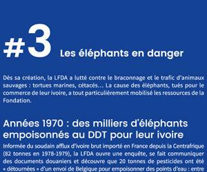 Les éléphants en danger
