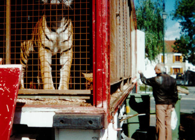 cirques animaux sauvages captifs tigre