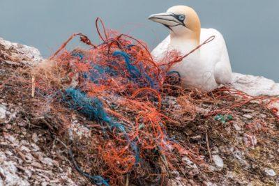 oiseau ordure