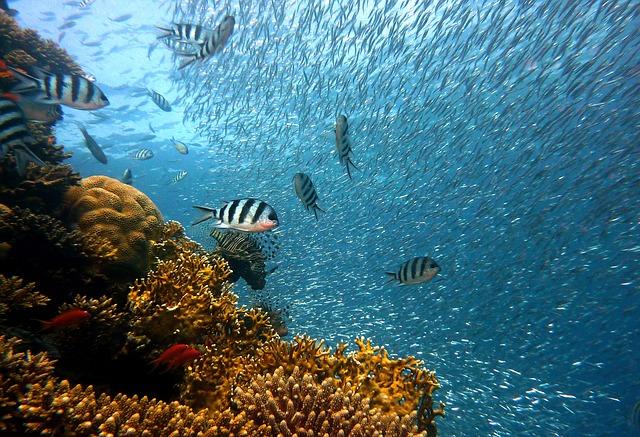 poissons tropicaux pêche au cyanure