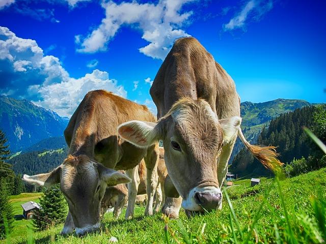 L'éveil à la sensibilité et la conscience animale d'un praticien rural