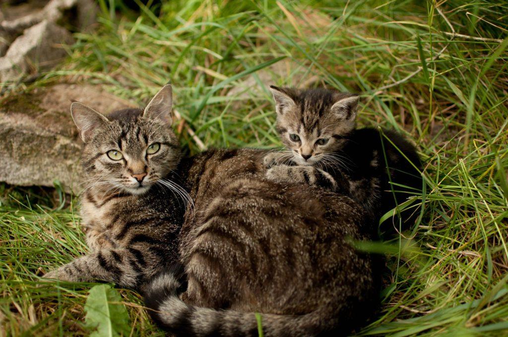 https://www.fondation-droit-animal.org/medias/2019/04/Chats-sauvages-1-1024x680.jpg
