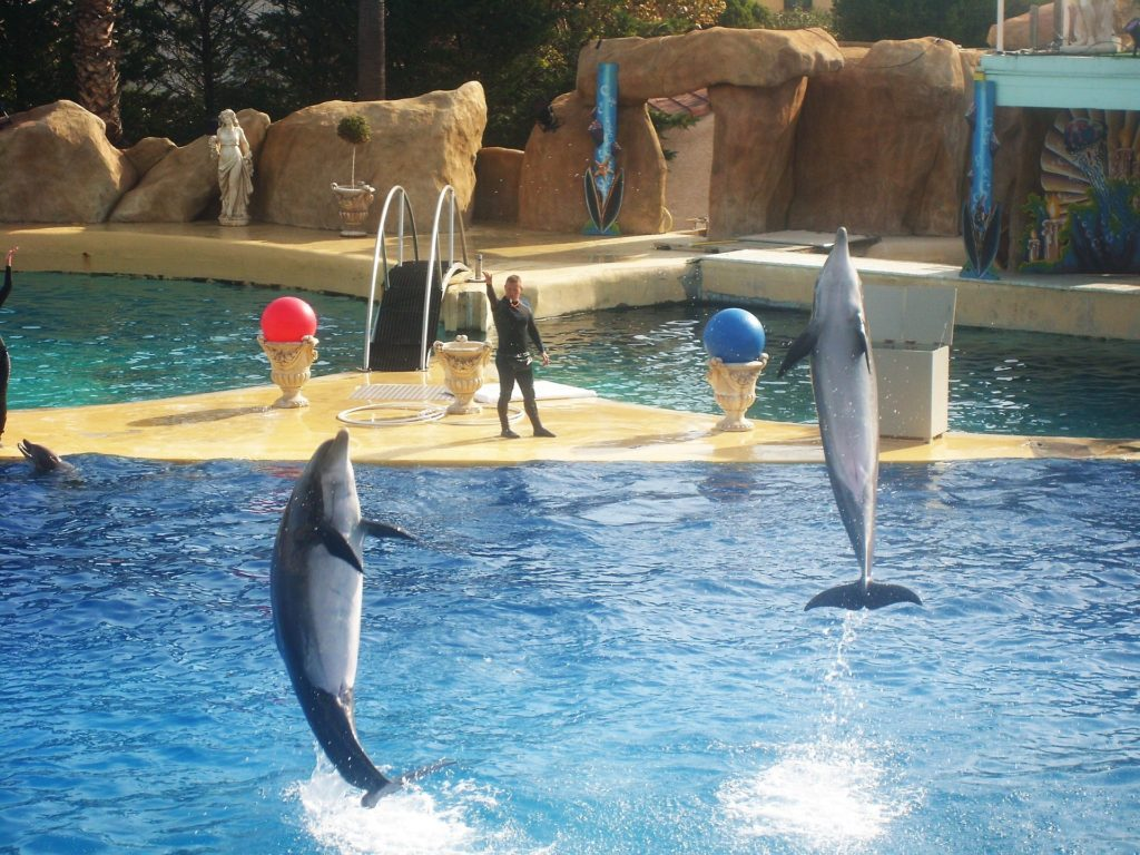 Dauphins dans un delphinarium