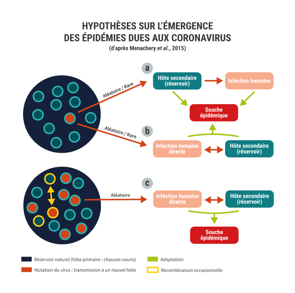 Emergence coronavirus