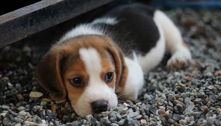 Pour L Interdiction Des Animaleries Retour Sur La Loi Lucy Et Ses Consequences