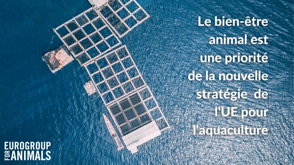 Le bien-être animal est une priorité de la nouvelle stratégie de l'UE pour l'aquaculture