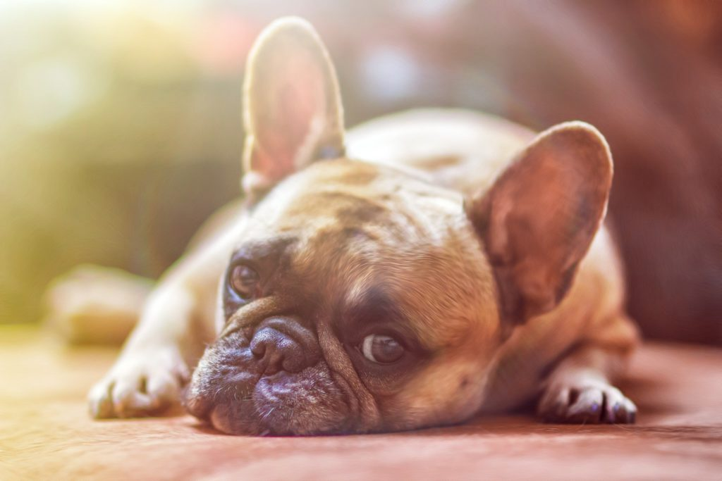 Le Sénat doit examiner la PPL contre la maltraitance animale au plus vite !
