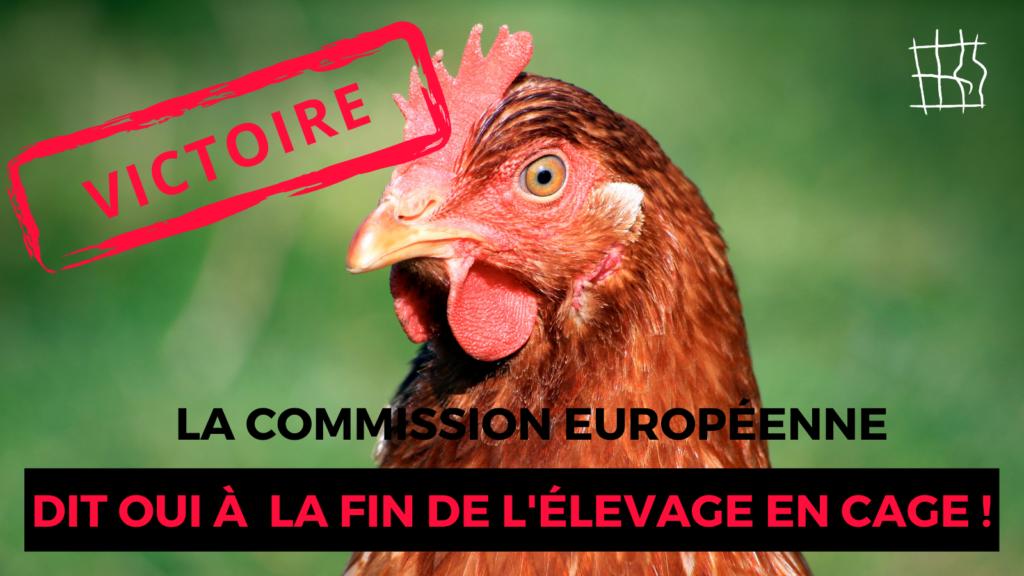 La Commission européenne dit oui à la fin de l'élevage en cage