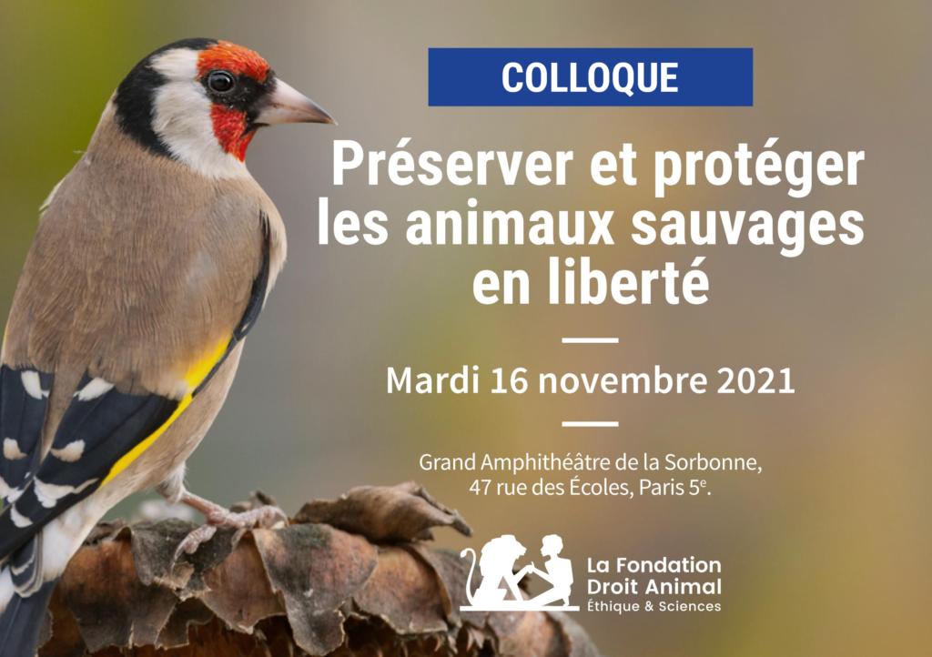 Préserver et protéger les animaux sauvages en liberté